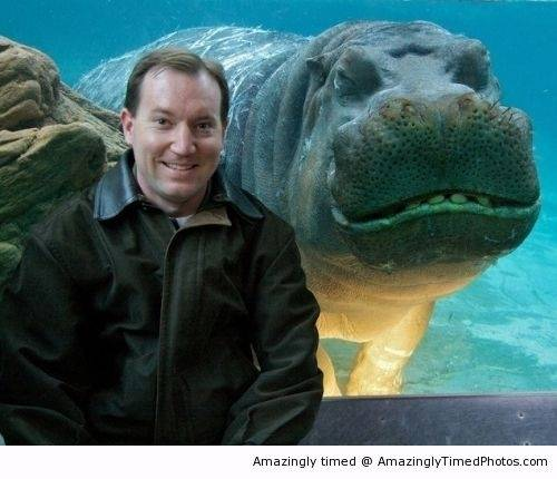 Hippos-like-to-photobomb-and-smile-too-resizecrop--