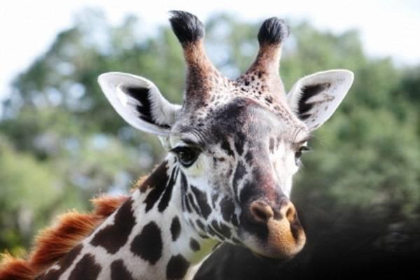 luksuz-putovanje-destinacija-odmor-safari-od-milion-dolara_01