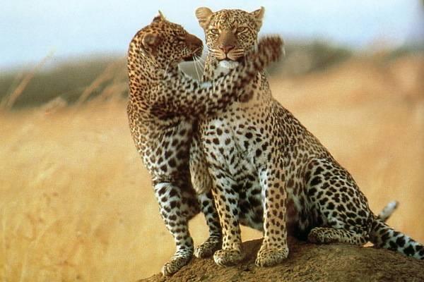 luksuz-putovanje-destinacija-odmor-safari-od-milion-dolara_08