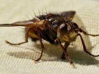 На природен начин решете се од здодевните инсекти!