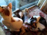 Куче и маче во чуден некој однос:)))