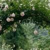Интересни предлози како да изгледа вашата градина