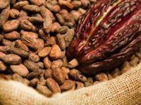 Подобрете си го расположението со шолја топло какао!!!