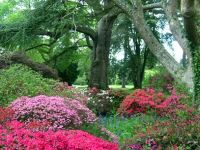 Exbury Градините во Њу Форест, Англија
