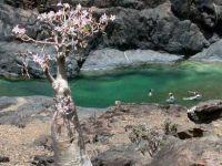 Сокотра – најчудното место на Земјата