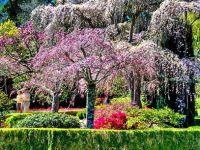 Градината Filoli во Сан Франциско