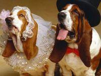 Најслатки животинчиња во свадбена облека :)))