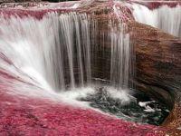 Caño Cristales –  поубава река во светот не постои…