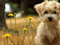 Изберете домашно милениче според хороскопскиот знак…