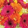 Цвеќиња што го прочистуваат воздухот во домот