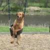 Куче на лулашка: Се гледа дека ужива:-)