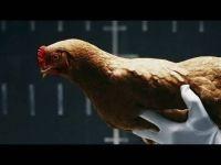 Разлика меѓу кокошка и мерцедес!
