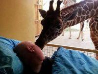 Срцепарателно: Жирафата со бакнеж се поздравила од работникот кој умира од рак