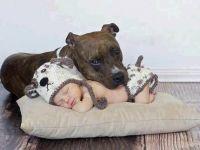 Ова е доказ дека децата треба да растат со кучиња!