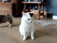 Две кутриња среќаваат екстремно трпелива мачка!