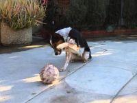 Ова е најпаметното куче на планетава!