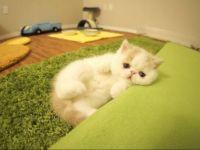 Праслатко маче кое научило да лае!