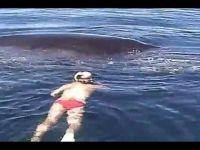 Приказна за еден кит која ќе предизвика солзи во вашите очи!