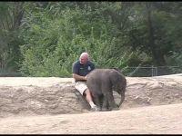 Слоновите се прекрасни!