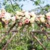 Романтична венчавка со многу свежо цвеќе