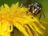 ОВА МОРА ДА ГО ЗНАЕТЕ: Кога ќе ве касне оса, пчела или стршлен – ОВА ќе ве спаси од болка!