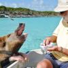 Одмор со свињи кои што живеат подобро од многумина од нас
