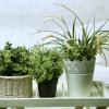 Студеното време не им годи на растенијата: Еве како вашите цвеќиња да ја преживеат зимата!