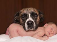 ИСТРАЖУВАЊЕТО ПОКАЖА: Кучето го штити бебето од инфекции!