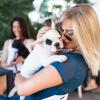 Плата за играње со кучиња – сто долари на час