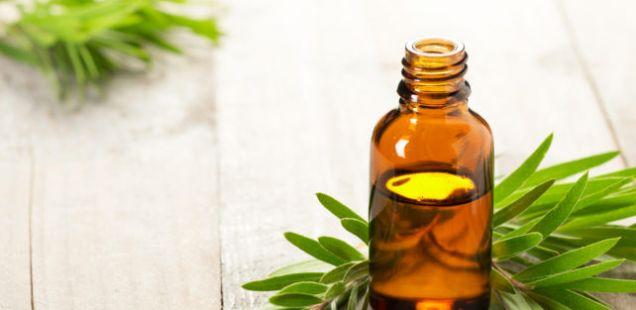 Најмоќниот природен антибиотик: Масло од диво оригано