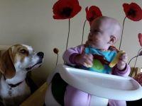 ОВИЕ РОДИТЕЛИ ГО ОСТАВИЈА БЕБЕТО САМО СО КУЧЕТО: Видете што следеше!