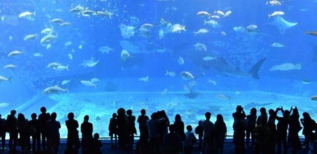 Во средината на кафулето експлодирал аквариум, гостите се поплавија