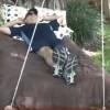 Поврзал две дрвени палети и направил нешто совршено за летните денови! ГЕНИЈАЛНО!