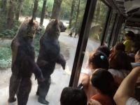 ЗДРАВО ЛУЃЕ, како сте? Во овој парк, мечките се поздравуваат со луѓето како со најблиски роднини!