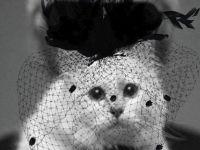 И ПО КАРЛ, КАРЛ: Погледнете ја новата модна колекција на мачката на Лагерфилд!