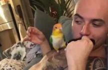"""""""Ало, така можеш само мене да ме бакнуваш"""": Нема никој пољубоморен од оваа птица"""